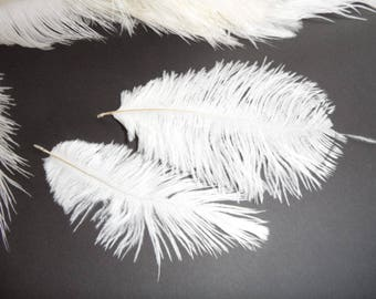 small 2 10/17cms white ostrich feathers