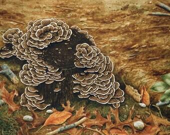 Autumn Stump with Turkey Tail Fungus