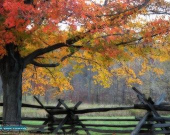 Fall in the Grove