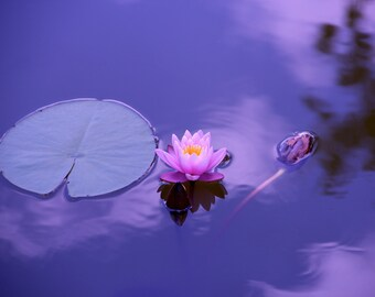 Love relationship soulmate psychic spiritual mediumship reading