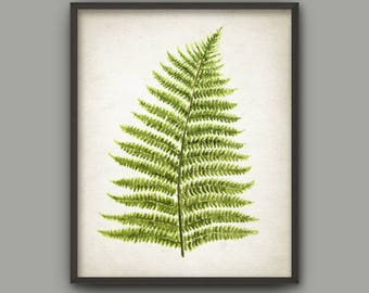Fern Watercolor Art Print, Woodland Fern Poster, Green Fern Painting, Fern Forest Decor, Botanical Wall Art, Nature Leaves Print AB751