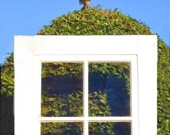 Crowing Sparrow