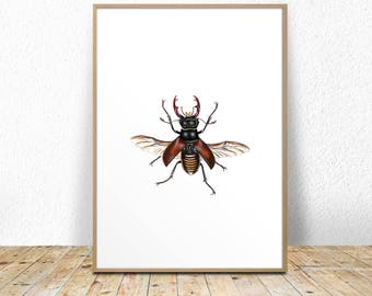 Insects print, Insect poster, insect wall art, vintage insect print, insect printable, insect wall art, taxidermy printable, taxidermy wall