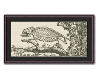 Chameleon Skeleton Cross Stitch Pattern, William Cheselden's Osteographia or Anatomy of Bones, Instant Download (AP572)