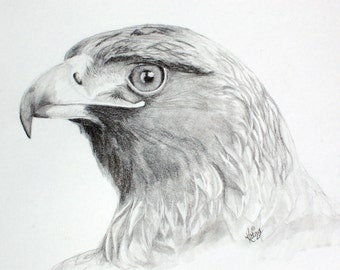 Golden Eagle Graphite pencil on paper