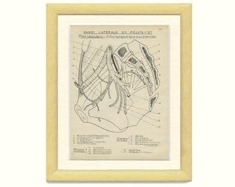 Lateral Wall of Pelvis, Human Anatomy Print 10, 1947, Vintage Medical Anatomy Art, Medical Diagram Geek Art Print Medical Student Gift