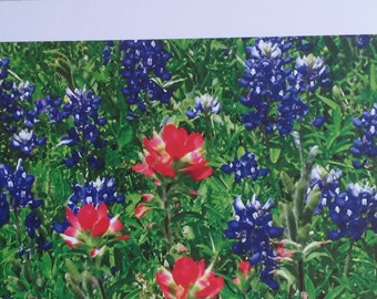 Bluebonnets/ Photo Print/ Greeting Card /Blank Inside/ Birthday Card/All Occasions Card