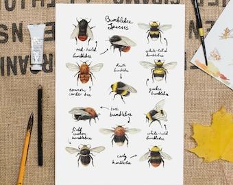 Bumblebee Species Art Print