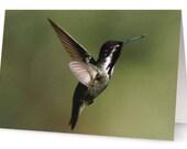 Hummingbird Blank Greetin...