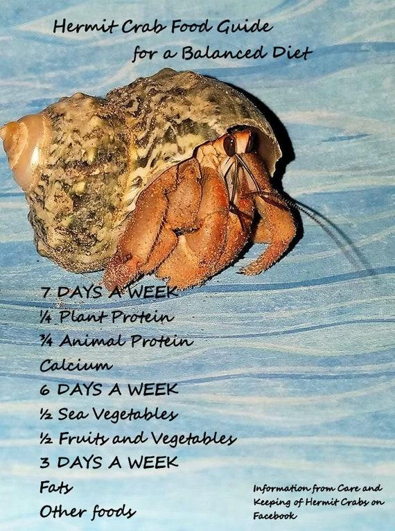 Hermit Crab Diet | Hemp Seeds Hermit Crab Food Hermit Crabs Hermit Crab