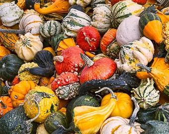 Kitchen Decor, Kitchen Art, Farmers Market, Gift for Vegetarian, Veggies, Food Print, Vegetable Print, Gourds, Pumpkins, Food Photography