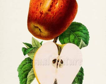 Apple Botanical Print, Apple Art Print, Fruit Art, Fruit Print, Kitchen Art, Garden, Apple Seeds