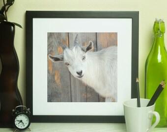 Farmhouse Decor |Goat Wall Art |Rustic Wall Art | Rustic Wall Decor |Farmhouse Photography|Goat Photography |Farm Decor |Goat Decor