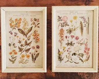 A Pair of Framed Vintage Botanical Colour Plates