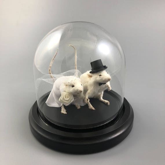 taxidermy mouse wedding cake topper taxidermy wedding mouse and groom mice cake 20767