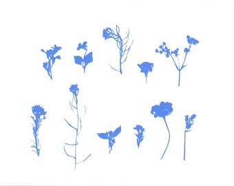 Blue Pressed Flower Hand Printed Silkscreen Illustration - A5 Limited Edition Botanical Fine Art Print - Wall Art - Modern Decor - Unframed