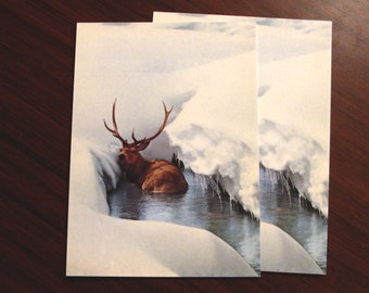 """Vintage Stag Postcard [dead stock, 4x6""""] deer antlers photography nature animal retro ice winter snow stream horns north icy icicle arctic"""