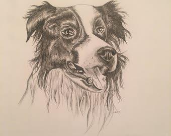Border Collie Portrait Print, Dog Lovers Print