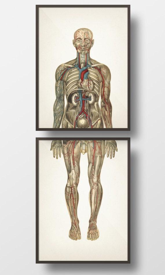 Beste Wie Man Lernt Anatomie Leicht Galerie - Anatomie Ideen ...