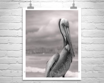 Pelican Art, Sea Birds Picture, Black and White Bird Art, California Coast, Ocean Birds, Pelican Picture, Pelican Photograph, Birder Gift