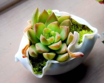 Mini Terrarium Planter Hand Blown Glass Succulent White Wedding favor