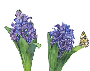 Hyacinth with butterfly watercolor print, HB4316, A4 size medium print