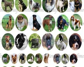 48 Image digitale cabochon les chiens ovale 30x40 et 18x25 (envoi mail)