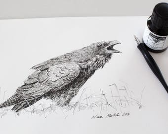 Raven, original ink drawing