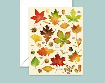 Autumn Cards, Leaf Cards, Autumn Leaves Note Cards, Fall Cards, Thanksgiving, Halloween, Back to School, Leaf Types, Tree Varieties