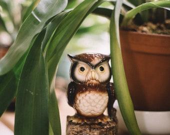 Vintage Owl Music Box