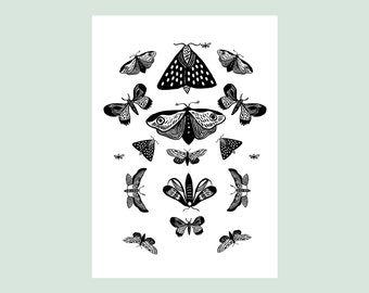 Butterflies / Art Print on fine art paper / Insect entomology board / Indian Ink drawing / Black and white