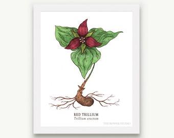 Botanical Trillium Print - Unmatted