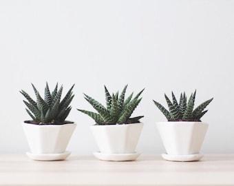 Mini Octagon Planter