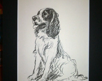 Vintage SPRINGER SPANIEL Signed Mounted 1936 'Mac' Lucy Dawson spaniel dog plate print Unique Christmas  Birthday Thanksgiving dog gift