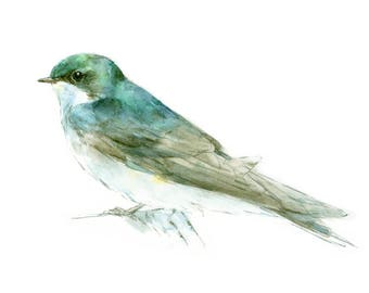 Tree Swallow watercolor painting - bird watercolor painting - 5x7 inch print - 0152