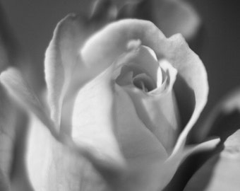 Summer Rose in Black and White Elegant Room Decor Wall Art - The Perfect Rose - Fine Art Photograph by Sarah McTernen