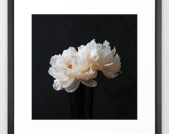 Peony Photography Print or Canvas, White Peonies, Shabby Chic, Boho Wall Decor, Floral Wall Art, Square Print 10x10 12x12 16x16 20x20 24x24
