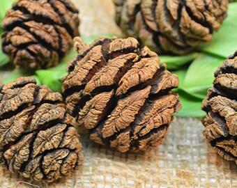 Sequoia Cones   Sequoia Pine Cones   Pine Cones   Natural Pine Cones
