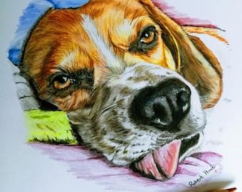 Pet pencil portraits - coloured pencils