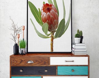 50%OFF,  Protea Print, Bedroom Decor, Modern Contemporary, Large Printable Poster, Digital Download, Photography Prints
