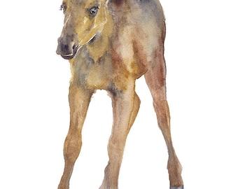 Moose Calf Watercolor Painting - 5 x 7 - Giclee Print - Nursery Art - Woodland Animal