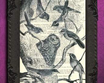bird species print bird collection print black and white