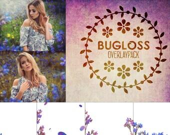 Bugloss - 30 Ochsenzungen Overlays