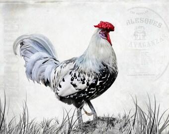 Rooster, Chicken, Bird, Animal, White, Gray, Off White, Le Poulet, Hamburg Chicken,Red White Black Art, Kitchen Decor, Bird Art Decor