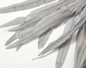 Magnifica Rooster Tail Feathers - Handpicked, Light Grey (10pcs) (C)