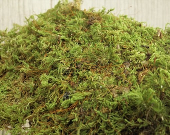 Gallon Bag Live Feather Sheet Moss Scraps for Transplant or Use Between Patio Stones