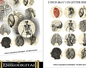 "Vintage Anatomy Bottlecap 2 inches Digital Collage Sheet 8.5""x11"" Jewelry pendants,scrapbooking,magnets,Medicine Digital"