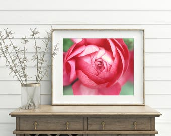 Pink Peony Photograph, Peony Print, Pink Flower Photograph, Fine Art Photography, Nature Photography, Flower Photography, Peony Home Decor
