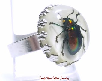 real scarab beetle silver oddity ring