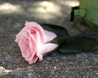 Eternalie Rose Stem